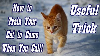 How to Teach Cat to Come When You Call Train Cat to be Called EASY TUTORIAL!! Useful Trick