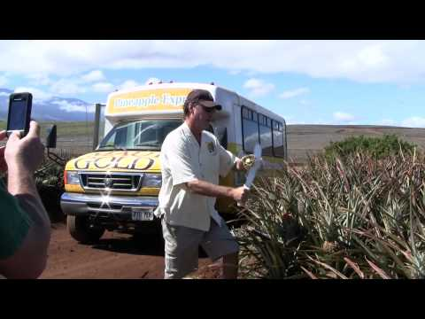 Maui Pineapple Tour