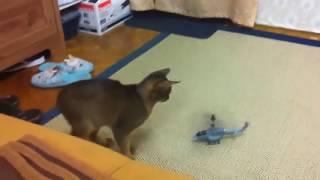 Кот вертолёт(Кот попрыгун., 2012-01-29T17:31:06.000Z)