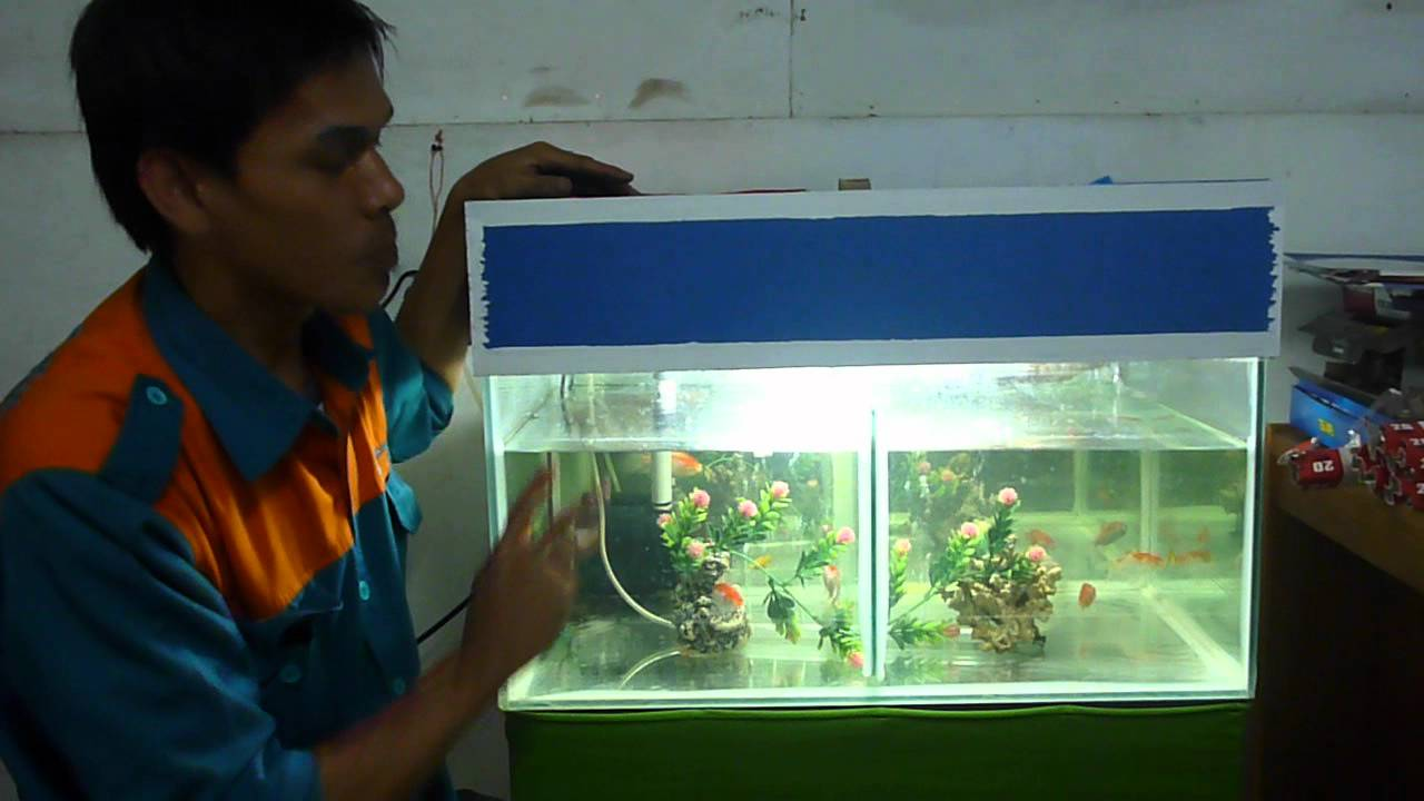 Memelihara Ikan Di Aquarium By Ikhsan Youtube