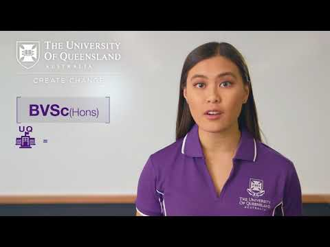 Interested In Studying Vet Science At The University Of Queensland?