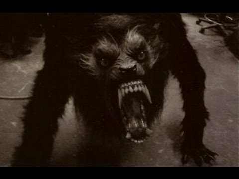 real werewolf caught on video tape youtube. Black Bedroom Furniture Sets. Home Design Ideas