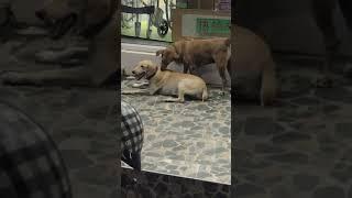 Собачьи слабости на Пхукете