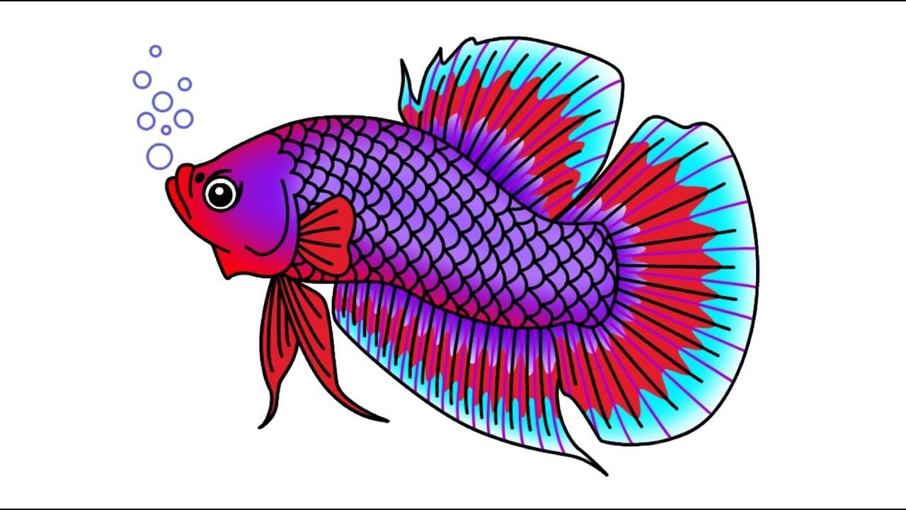 Gambar Ikan Cupang Juara Siap Tarung Betta Fish Fighter Youtube