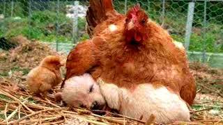 Мамы и детеныши  Животные и их малыши Видео для детей