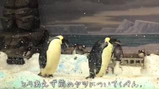 一際存在感のある皇帝ペンギンが泳いで食べて、歩いてコケる。とても癒...