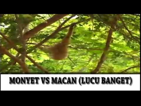 Full Download Macan Vs Monyet Video Lucu Review