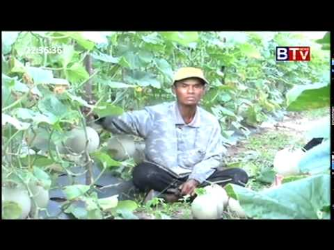 BTV Khmer Agriculture News  Aug 22,2015