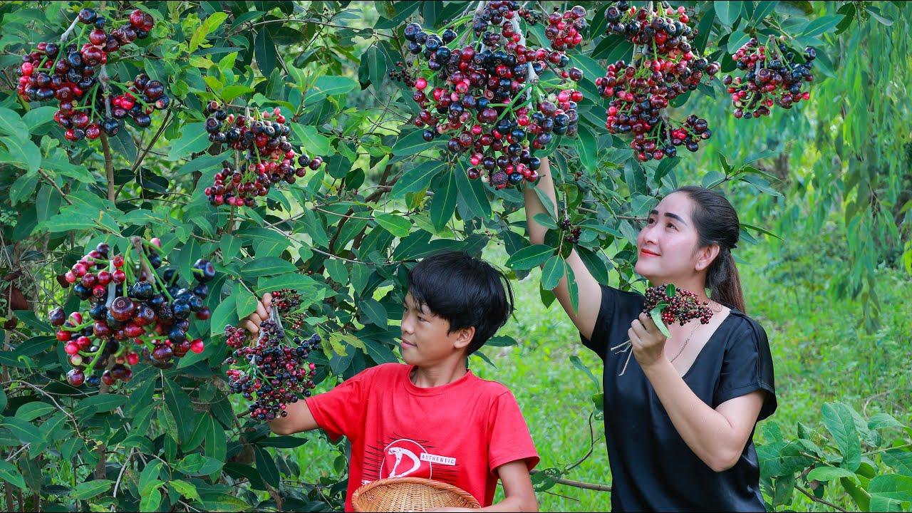 Have you ever seen Wild Java Plum   Wild java plum eating   Wild java plum collecting