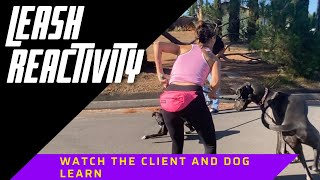 Watch as I coach a client through her 100lb dog's leash reactivity.