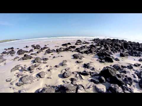 Galapagos Isabela Islote Las Tintoreras and Santa Cruz Turtle Bay