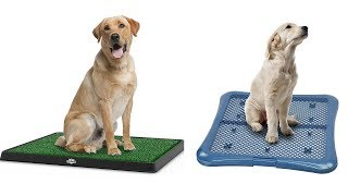 Top 5 Dog Training Pads And Trays Reviews - Best Dog Training Pads And Trays