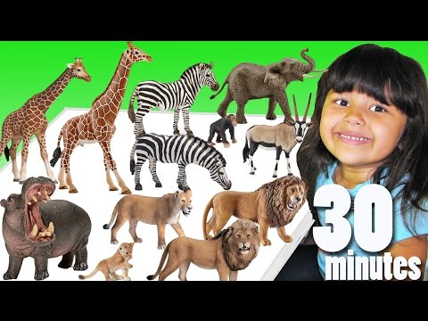 My Animal Toy Collection African Animals - Learn Animals Names And Sounds