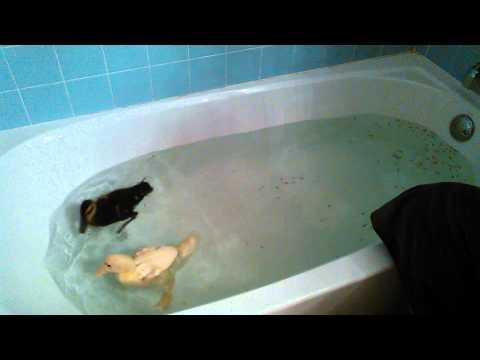 Ducks Eating Fish In The Bath