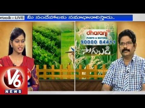 Live stock farming techniques for goats & sheep - Animal Husbandry Deputy Director - Sagubadi