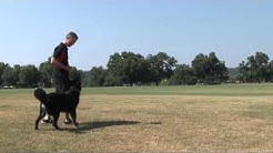 Sit Means Sit Dog Training Austin