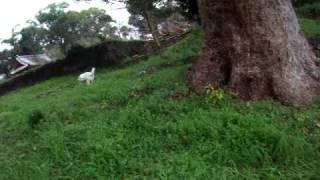 モロの子供によく似たうちの外犬「ちこ」散歩の途中によく小城公園の山...