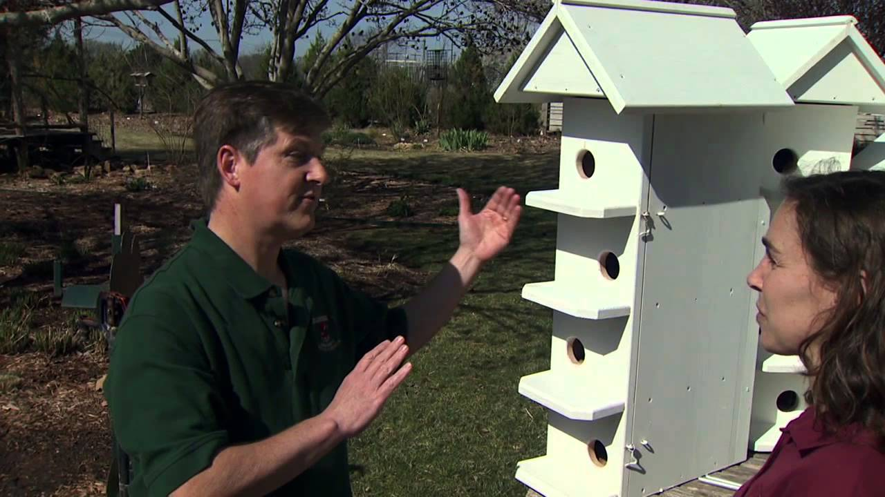 purple martin houses - youtube