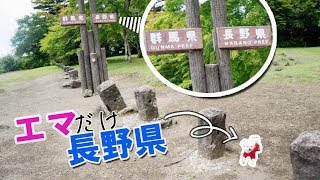絶景🔭見晴台でエマとド定番スタイル😆[マルチーズ×ポメラニアン]#軽井沢旅行