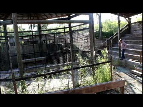 The RETURN  to Jungleland Zoo . Inside the Lions Den !