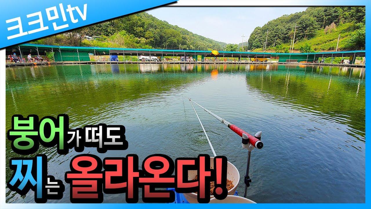 원반분할추 채비로 만든 손맛터 여름 붕어낚시 찌올림 / 시흥 산정낚시터