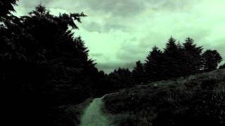 Twilight Fauna  -The Old Forest Road
