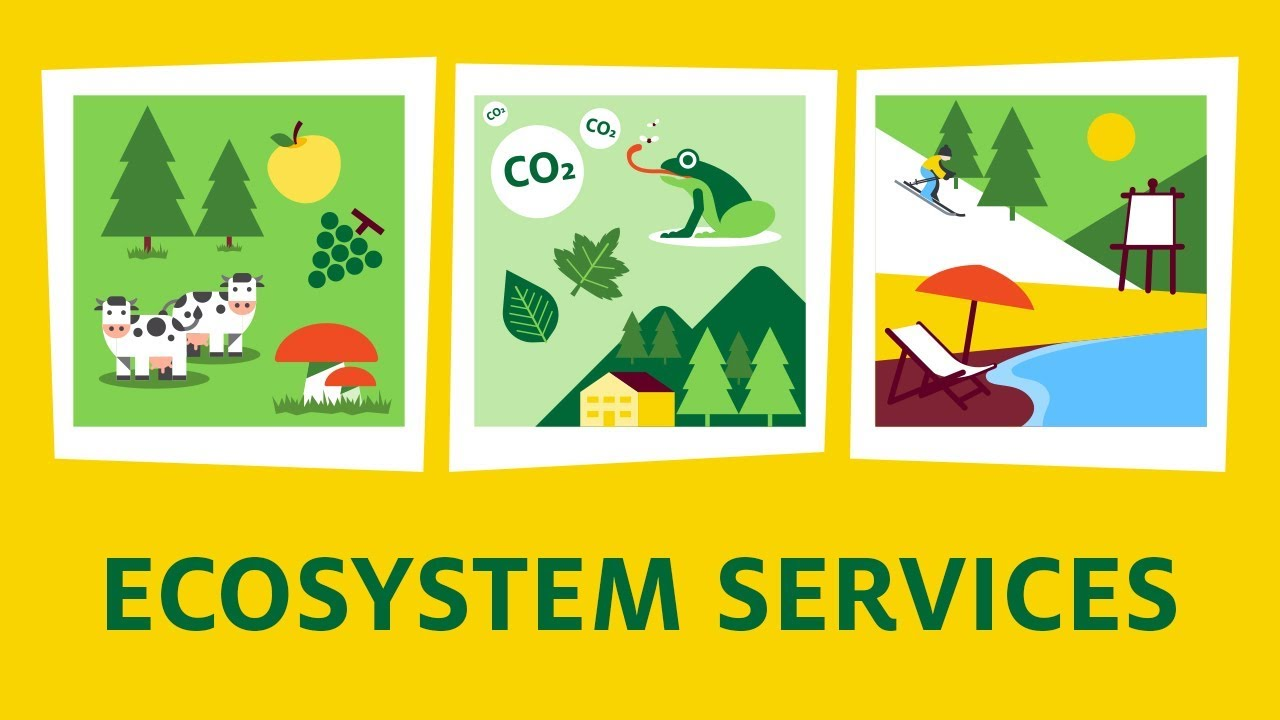 what are ecosystem services youtube
