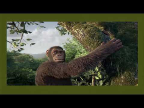 Macaco Véio - Caco Sodré