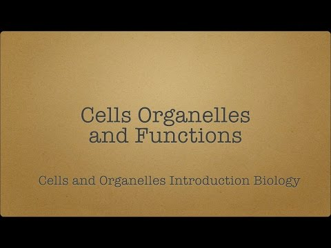 Cells | Organelles | functions of Organelles | Animal Cell