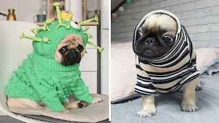 Funniest and Cutest Pug Dog Videos Compilation 2020 #4