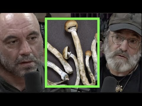The Benefits of Micro-dosing Mushrooms w/Paul Stamets | Joe Rogan