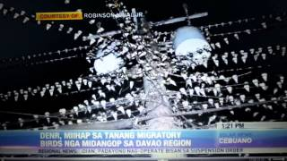 Migratory birds in Davao Region
