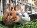 14 Cute Facts About Rabbits