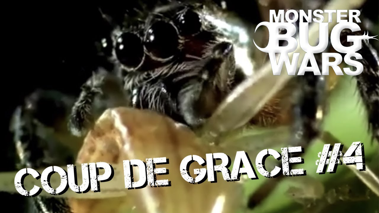 MONSTER BUG WARS | Coup De Grace Collection #4