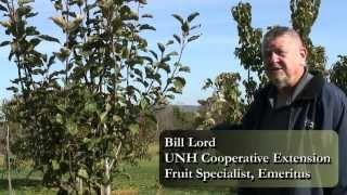 Choosing And Caring For Backyard Fruit Trees