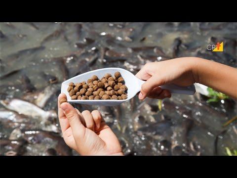 Sistemas de Produção - Curso a Distância de Criação de Peixes CPT