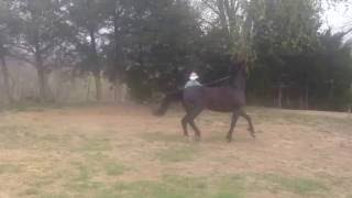 video Delilah's Darling at Rowell Farm