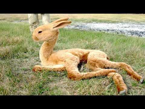 8 Animal Hybrids You Never Knew Existed