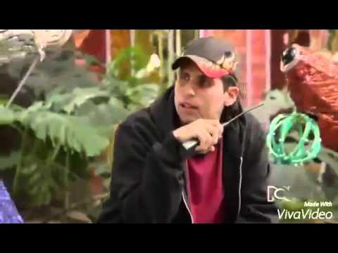 Frases lady la vendedora de rosas - alex y el mono