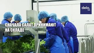 """Вся правда о """"МакДональдз"""": Как готовят салат для бургеров"""