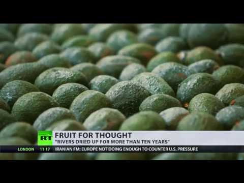 Avocado farms supplying UK leave Chileans without clean water access
