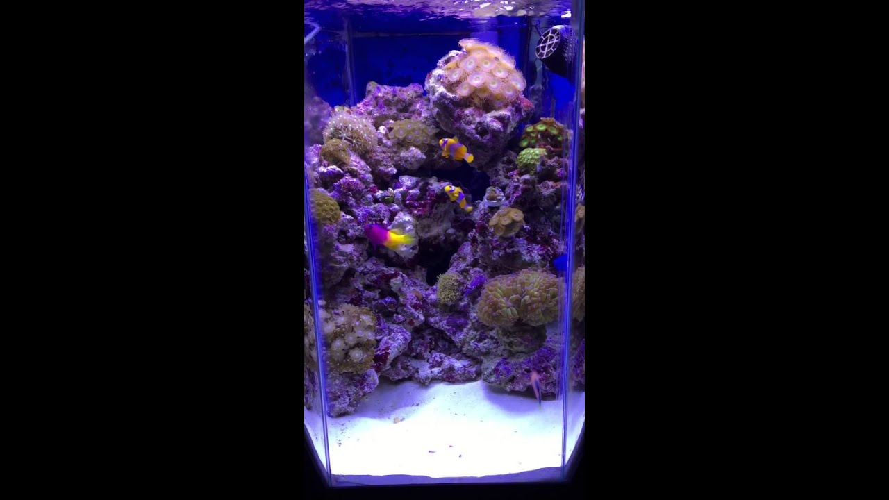 20 gallon hexagon reef tank youtube for 20 gallon saltwater fish tank