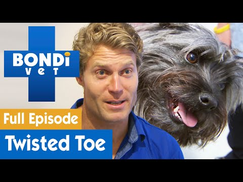 Terrier Dog Has Brutally Twisted Toe | FULL EPISODE | S08E02 | Bondi Vet