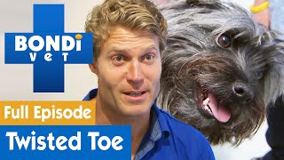 🐶 Terrier Dog Has Brutally Twisted Toe | FULL EPISODE | S08E02 | Bondi Vet