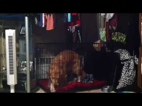 Dog Escapes From Top Paw Double Door Dog Crate Youtube