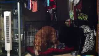 Dog Escapes From Top Paw Double Door Dog Crate