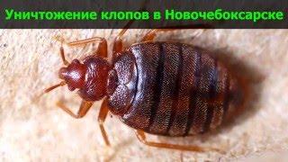 Уничтожение клопов в Новочебоксарске(, 2016-03-26T12:05:40.000Z)