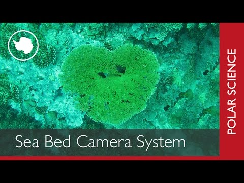 Polar Science in 60 Seconds | Sea Bed Camera System