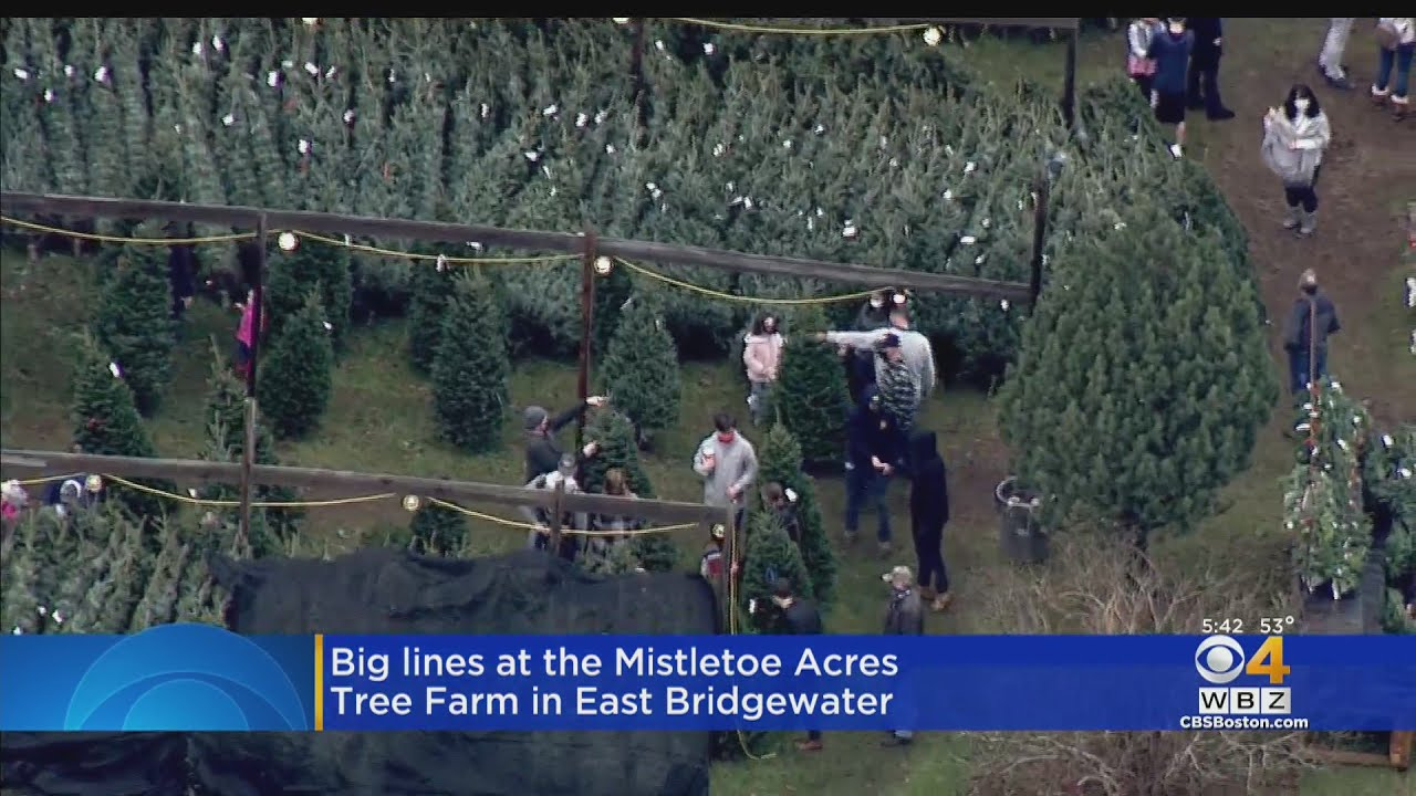 East Bridgewater Christmas Tree Farm Slammed With Customers Youtube