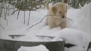 Mina - Let it snow